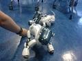 IOCT robot dog