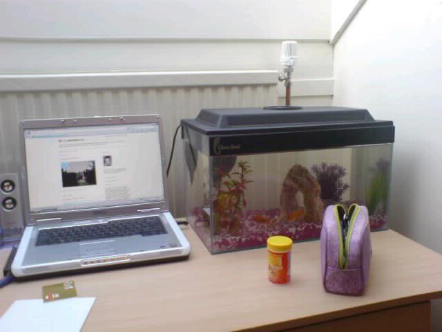 Lisa has fish