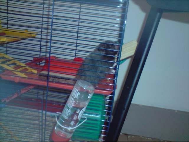 Boris the shifty hamster