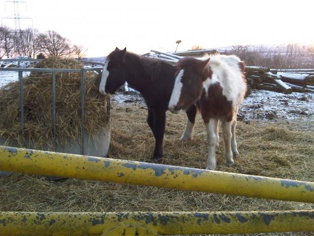 Ponies at Smallage Equestrian Centre