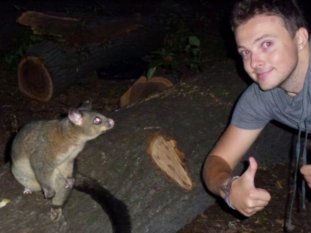 Possum in Fitzroy Gardens, Melbourne