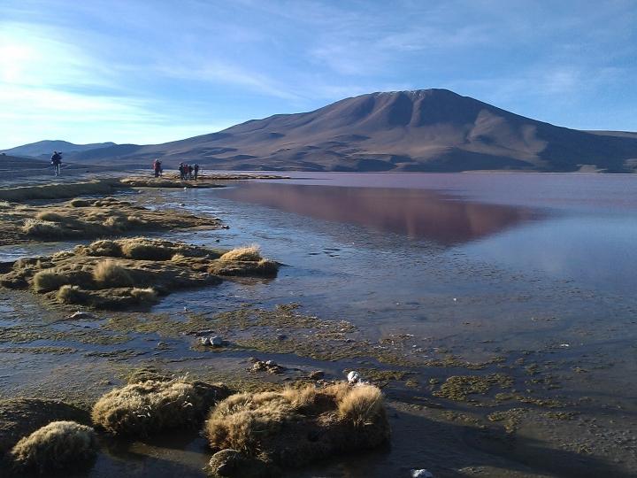 Laguna Colorada, Eduardo Avaroa Andean National Reserve, Bolivia