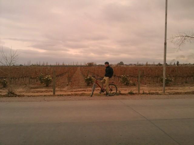 Bodega Trapiche, Coquimbito, Mendoza